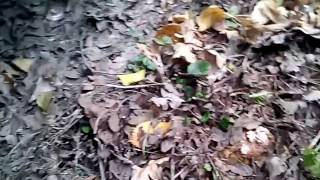 Песочники грибы  - напал на грядку!