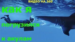 ➥Акула. Как я погрузился к акулам. Видео на 360 градусов.(Акула. История о том, как я погрузился к акулам в формате видео на 360 градусов. Видео смотрите в браузере..., 2016-02-19T05:00:00.000Z)