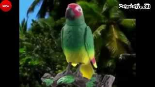 Caramba.TV Попугай Иннокентий