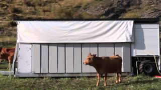 fabrication remorque TPA, traite vache