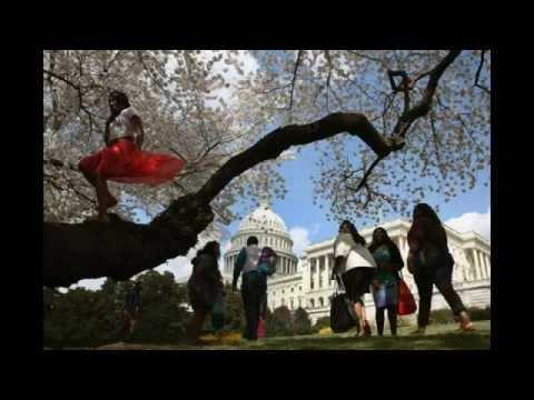 D.C. Cherry Blossom 10 miler 2015