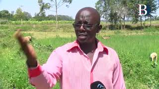 Additional 1200 acres put into rice production at Mwea
