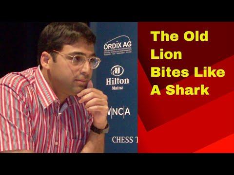 The old lion bites like a shark