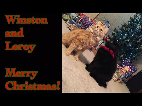 Winston and Leroy, Merry🎄Christmas!