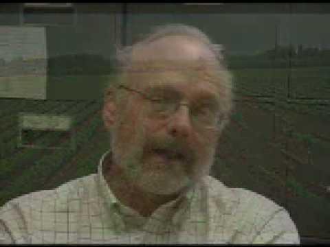 Carrot breeding at UW-Madison seeks to reduce pesticide use