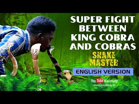 Wow! Super fight between King Cobra and Cobras | Vava Suresh | Snakemaster - English Version