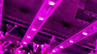 Illumitex Horticulture LEDs in World's largest Indoor Vertical Farm!