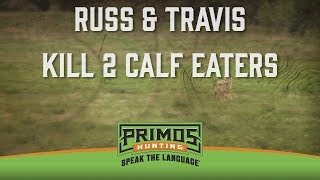 Download Russ Wentworth & Travis Anderson Kill 2 Calf Eaters