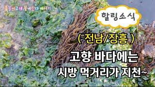 전남/장흥) 고향바다 힐링소식- 해초류 먹거리가 지천~