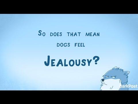 Inside A Dog's Brain: Do Dogs Feel Jealousy?