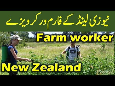 Work in New Zealand : New Zealand Farm Worker Visa.