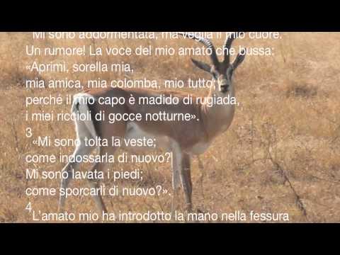 Frasi Matrimonio Cantico Dei Cantici.Cantico Dei Cantici Youtube