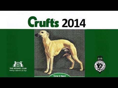 Crufts 2014 Cairn Terrier