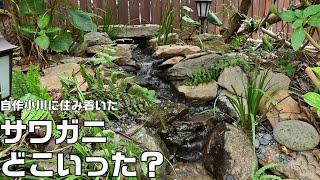庭に一から作った小川完成後4か月、住み着いたサワガニはまだいるのか?&メダカ池ビオトープにメダカ、ミナミヌマエビ投入。