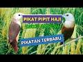 Suara Pikat Burung Pipit Emprit Haji Ribut Terbaru  Mp3 - Mp4 Download