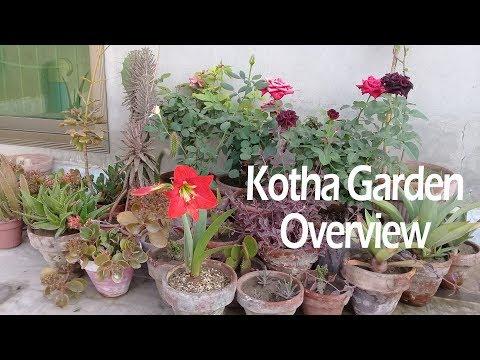 Garden overview (Part 1) April 2018 | Rooftop garden | kotha garden
