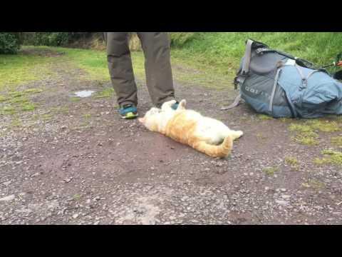 Hiking Ireland with Sara - Dingle Way Day 4