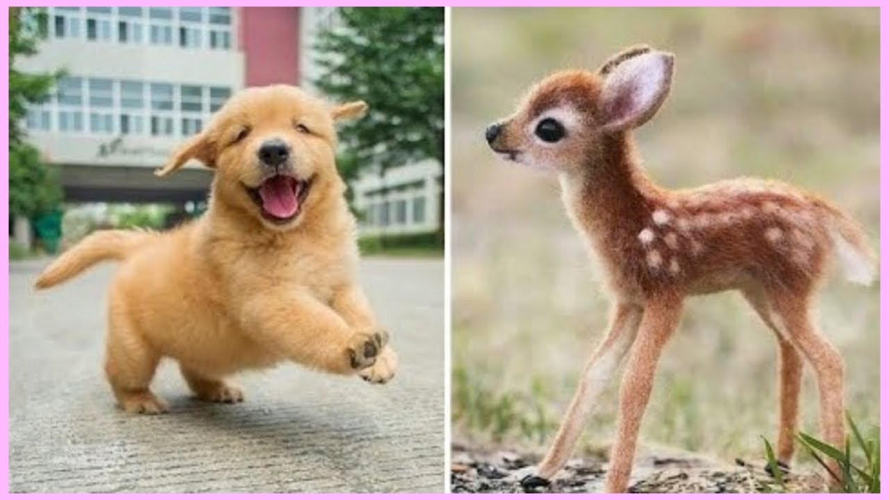 Super Cute Baby Animals 🔴 Funny Cats and Dogs Videos (2019 ...