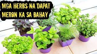 Meron Ka Ba Ng Mga Herbs Na Ito Sa Bahay?,Alamin Kung Anong Swerte at Health Benefits na Taglay Nila