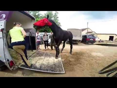 Погрузка лошади в коневозку. Loading a horse into a trailer. GoPro.