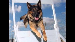 Las Vegas Dog Trainers