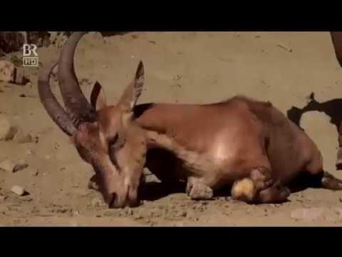 الحياة البرية في جبال كوردستان
