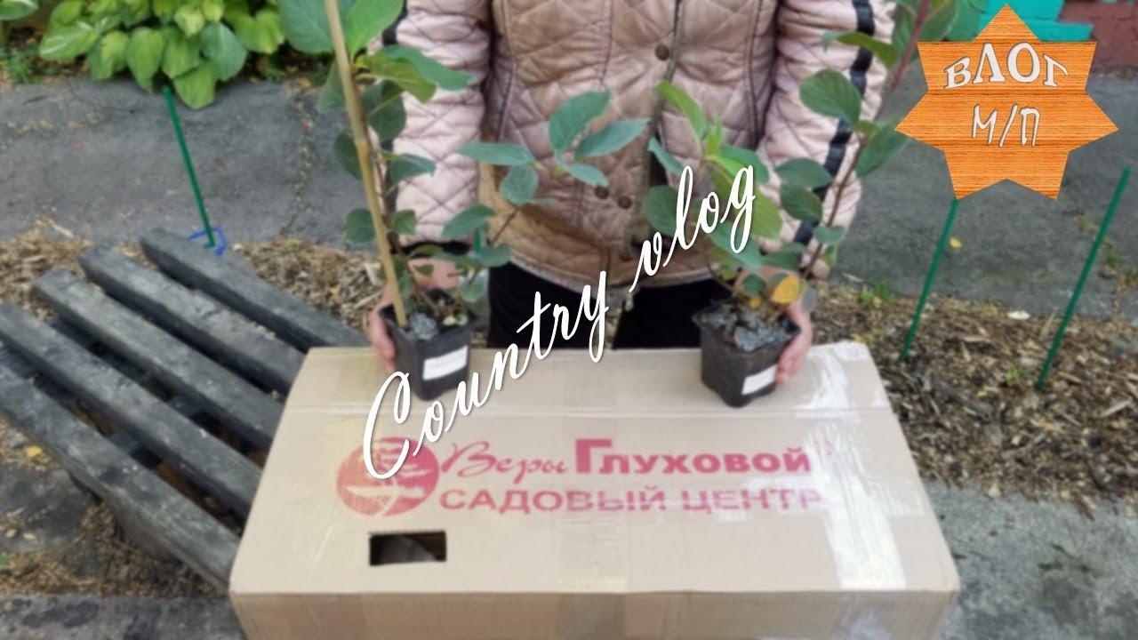 Гортензия Самарская Лидия. Распаковка, осенняя посадка, магическое заклинание от бабушки.
