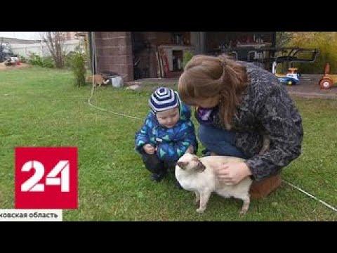Смотреть Малыша, брошенного родной мамой в Щелкове, приютили в ресурсной семье - Россия 24 онлайн