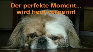 Der perfekte Moment... wird heut verpennt - cover & Lyrics - Max Raabe