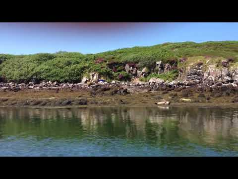 Seals Coast Of Isle Of Skye Inner Hebrides Scotland