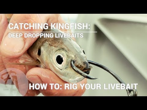 Catching Kingfish: How To Rig A Live Bait - Deep Dropping Or Slow Trolling
