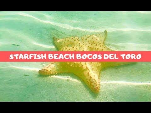 Best Beach In Bocos Del Toro! Starfish Beach