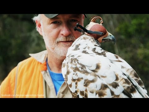 Epic Falconry Montage - Let