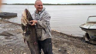 РЫБАЛКА НА ТРОФЕЙНОГО СОМА Поймали СОМ НА 40 КГ Catfish fishing
