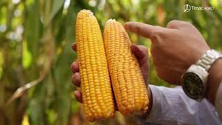 TIMAC AGRO - Fazenda Boa Esperança