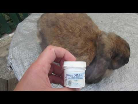 Опоясывающий лишай: симптомы, лечение аптечными и