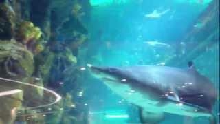 В заключение о морском аквариуме в ocean plaza