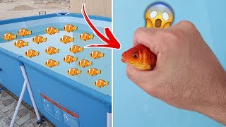 I bought real fish 🐟 | And put it in the pool 🌊 (Unexpected experience!!😲)