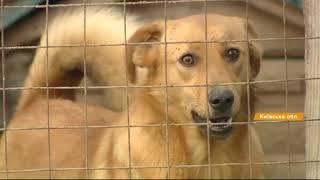 Забери меня домой! 500 кошек и собак ждут хозяев в приюте под Киевом