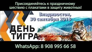 NHR ♥ Приглашение к участию в шествии на День Тигра 2018