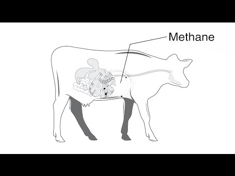 Reducing greenhouse gases in dairy production