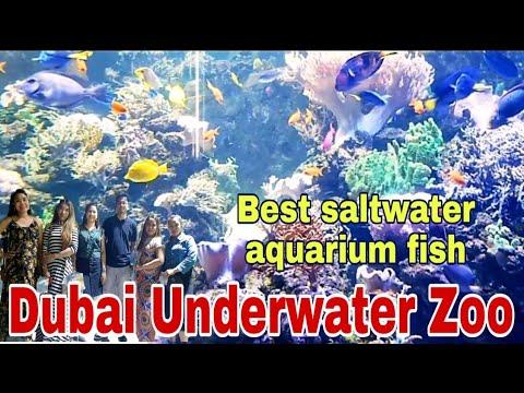 Dubai underwater zoo || Best saltwater aquarium fish || Dubai aquarium and underwater zoo