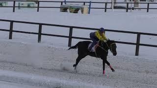Приз ЗИМНИЙ  Скачка для лошадей чистокровной верховой породы старшего возраста, дист. 1400 м