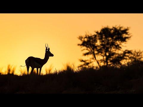 Greater Kruger nature sounds: Manyeleti | African wildlife & animal noises, birds singing song yoga