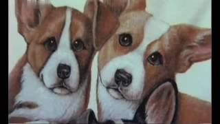 Вельш корги Пемброк-101 dogs