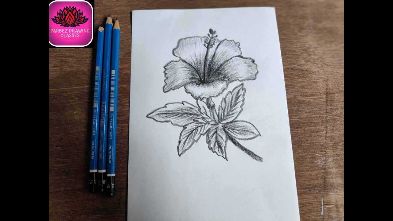 How to draw beautiful hibiscus flower with pencil shading ...