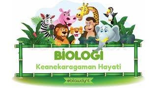 Biologi Kelas X - Keanekaragaman Hayati   Salsabila Widyanti