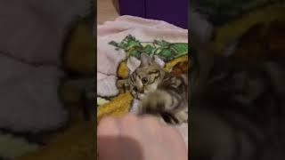 Котенок отжал телефон