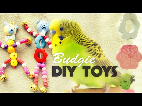 How to make Budgie Toys | DIY Toys Under 10$