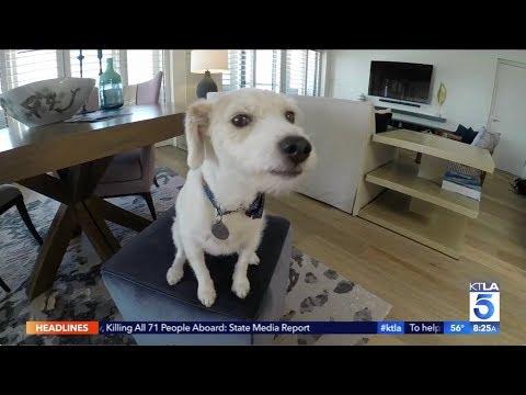 KTLA - Loews Santa Monica Beach Hotel - Puppy Love